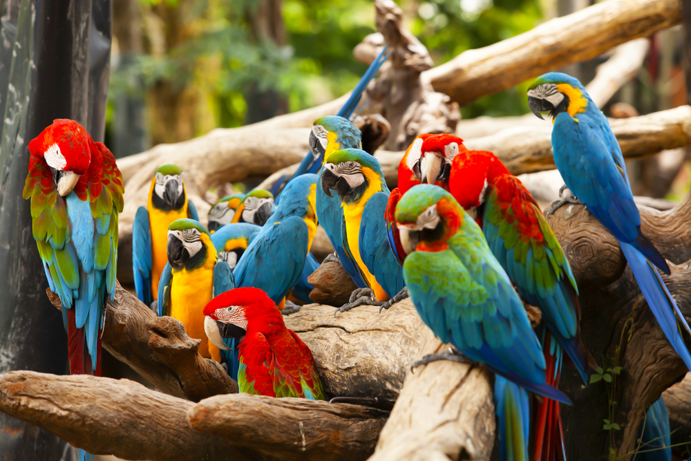 Discovering the exotic birds in London