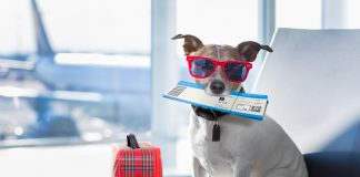 travel with pet